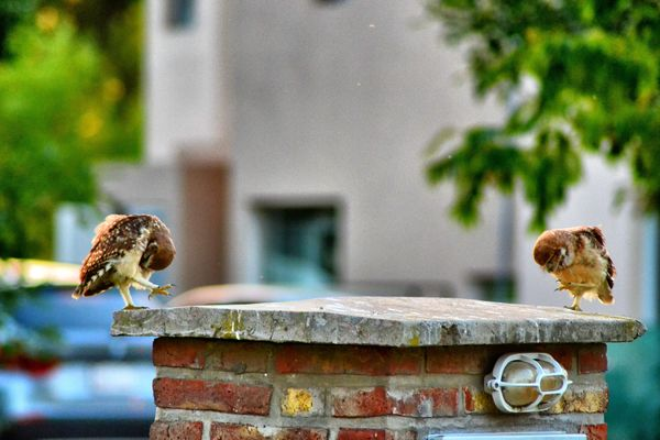 Coordinando. love, beautiful, amazing, cool, awesome, owls, ilobsterit. buy photo