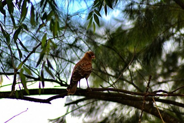 a bird sitting on a branch in a tree. buy photo