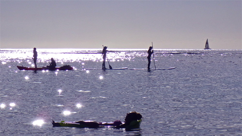 Look!  I see Turtles!. sea, beach, water, weather, hawaii, boards, waikiki, paddle, silhouettes, sparkle, turtles, honolulu. buy photo