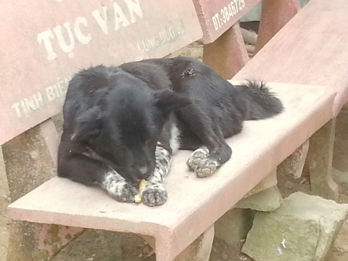 A bite to eat. food, pets, dogs, animals, eating, vietnam, benches, phuocthanh, tucvan. buy photo