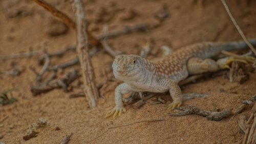 #animal #2014 #camera #sony #a57 #zoom. pets, nature, animals, photography, colorful, photos, hdr. buy photo