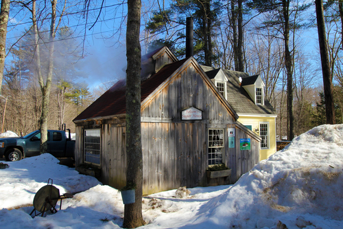 At Folsom's Sugar House in Chester, New Hampshire. spring, maple, newhampshire, chester, mapletree, maplesugaring, maplesugar, maplesugarhouse. buy photo