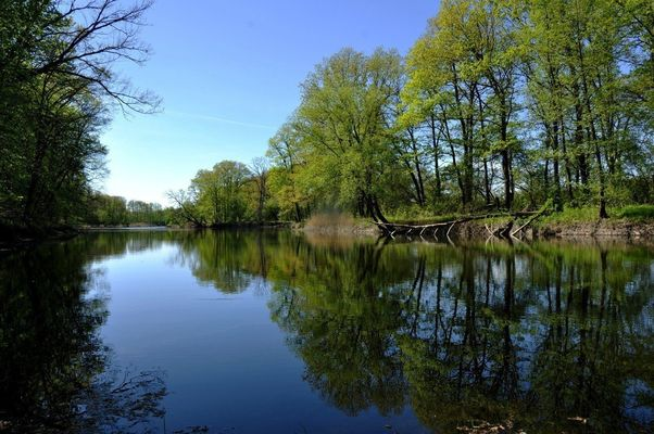 a large body of water surrounded by trees. buy photo