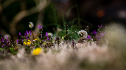 A Distance Piece. green, art, love, nature, lost, virginia, spring, purple, unitedstates, bokeh, fineart, extreme, natur, dandelion, explore, translation, passion, 370, virginiabeach, ml, loewenzahn, lipoma, kunstwelt, photosophie, giesea, lipom, crowdmedia, drachenfanger, ilobsterit, andreasmgiesea, darchenfanger. buy photo