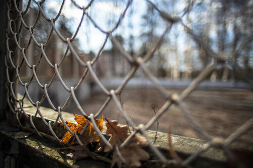 IMG_2631. city, nature, leaves, canon, season, grid, focus, russia, bokeh, moscow, details, olympus, 24mm, manual, om, zuiko, 242, 6d, ilobsterit. buy photo
