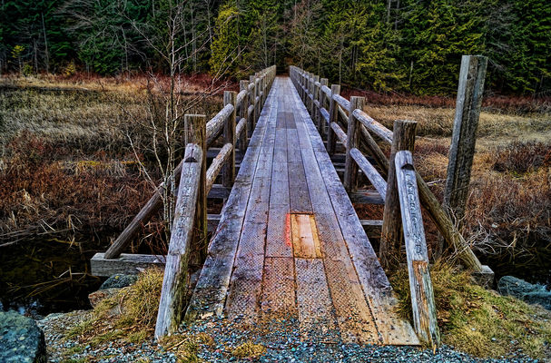 Bridging the Gap. wood, bridge, trees, lake, squamish, brohm. buy photo