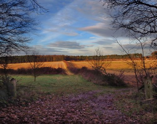 The Prospect. clouds, walking, colours, exploring, relaxing, calming, serenity, nottinghamshire, tranquillity, clumberpark, theprospect, robinhoodway, ilobsterit. buy photo