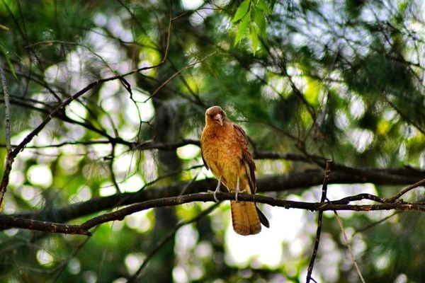 a small bird sitting on a tree branch. buy photo