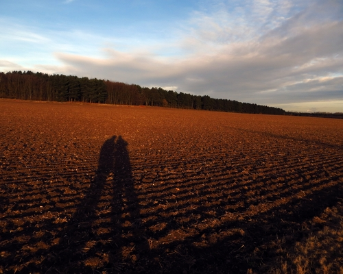 Always Brothers. sky, woodland, shadows, brothers, soil, trail, future, past, nottinghamshire, robinhoodway, ilobsterit. buy photo