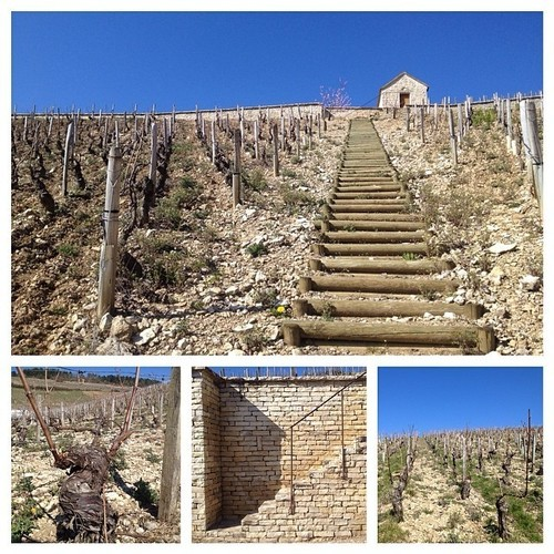Sleep or stroll through #Chablis vineyards on a perfect blue sky day? After little deliberation, chose the latter. #gjb2014. square, squareformat, chablis, iphoneography. buy photo