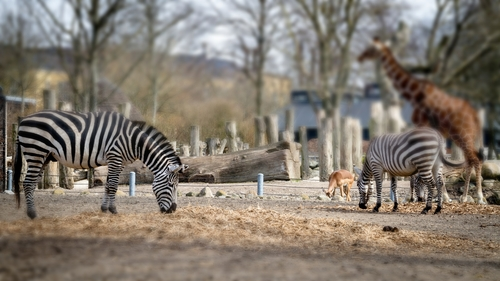 zoo-7. city, colors, animals, canon, out, denmark, photography, zoo, photo, colorful, day, foto, picture, l, danmark, københavn, cophenhagen, zoologisk, farver, 2013. buy photo