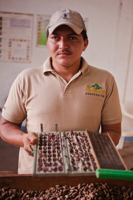 Testing Cacao Bean Quality | Nicaragua. latinamerica, america, canon, chocolate, 5d, nicaragua, canon5d, managua, choco, ngo, centralamerica, chocolade, cacao, beyondborders, snv, cacaoplant, canon5dmarkii, 5dmark, cacaoplantation, beyondbordersmedia, beyondbordersutrecht, snvworld, ngoproject. buy photo