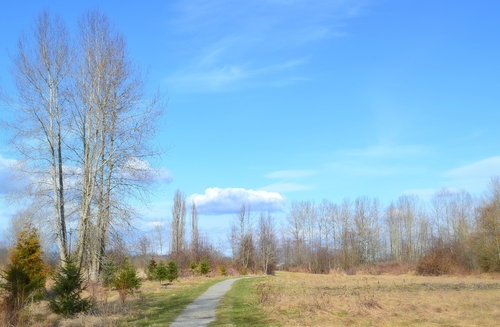 Elgin Heritage Park. trees, sky, clouds, outdoors, nikon, scenery, view, path, britishcolumbia, ngc, scenic, trail, wilderness, d3100, nikond3100. buy photo