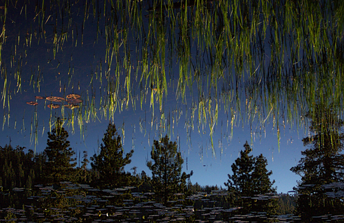 raining green spears. blue, mountains, reflection, water, 510fav, reeds, pond, 300, illusions, lilypads, popular, flipped, fotogail, morewater, your300pre2006favesthanks, ilobsterit. buy photo