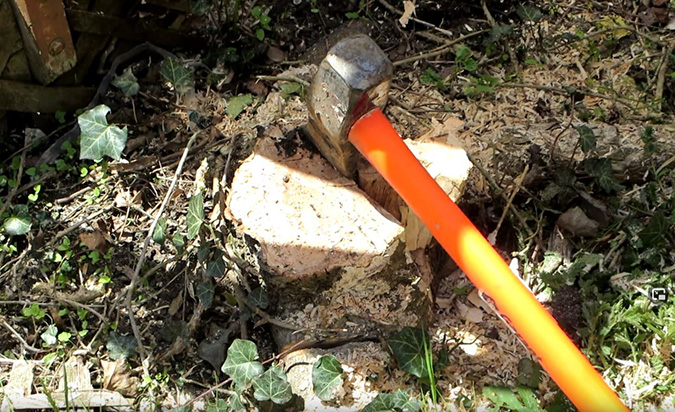tree service Winchester Virginia