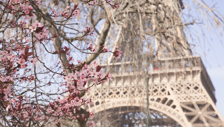 Eiffel Tower during spring