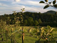 KT's Orchard and Apiary