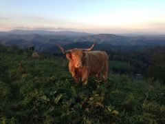 Highland Meadows Cattle Co.