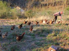 Myseanica Family Farm LLLP