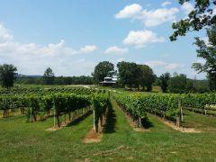 Nottely River Valley Vineyards, LLC