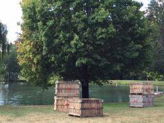 Holt Orchards