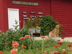 Stoney Hollow Farm