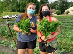 UT's VOL Supported Agriculture Program (VSA)