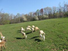 Highlander Farm