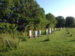 Cantarroso Farm and Apiary, LLC