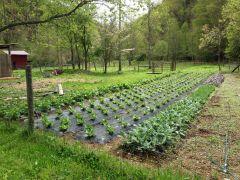 Nichols Branch Farm