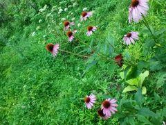 Big Briar Botanicals