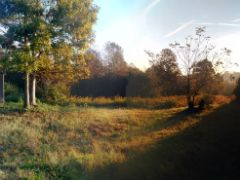 Buzzing Bee's Woodland Preserve