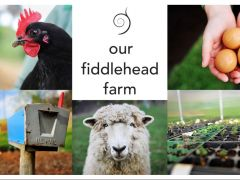 Our Fiddlehead Farm