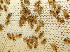 Wildwood Bee Co