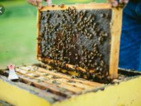 Horsecreek Apiaries & Honey Farm LLC