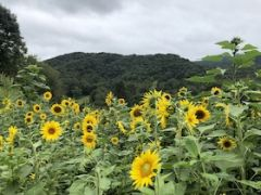 Herb Mountain Farm