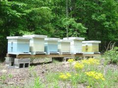Winding Road Apiaries