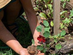 Abundant Toad Garden