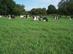 Trantham's 12 Aprils Dairy & Happy Cow Creamery, Inc.