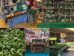 Wildwood Herbal Plants & Produce