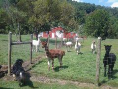 Venezia Dream Farm
