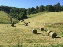 Harrell Hill Farms