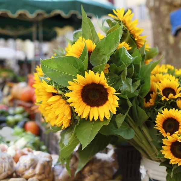 Brookline Farmers' Market