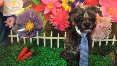 Profile Photo of Moe Dog  Mascot