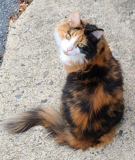 Profile Photo of Goldilocks The Cat  Office Cat