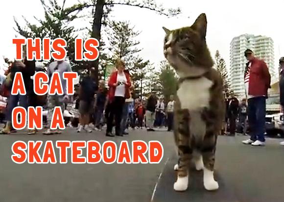 cat-on-a-skateboard