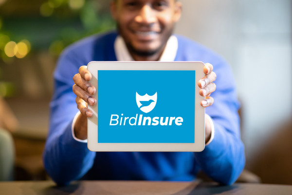 Sample branding #2 for Birdinsure