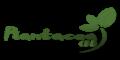 Plantacea CBD