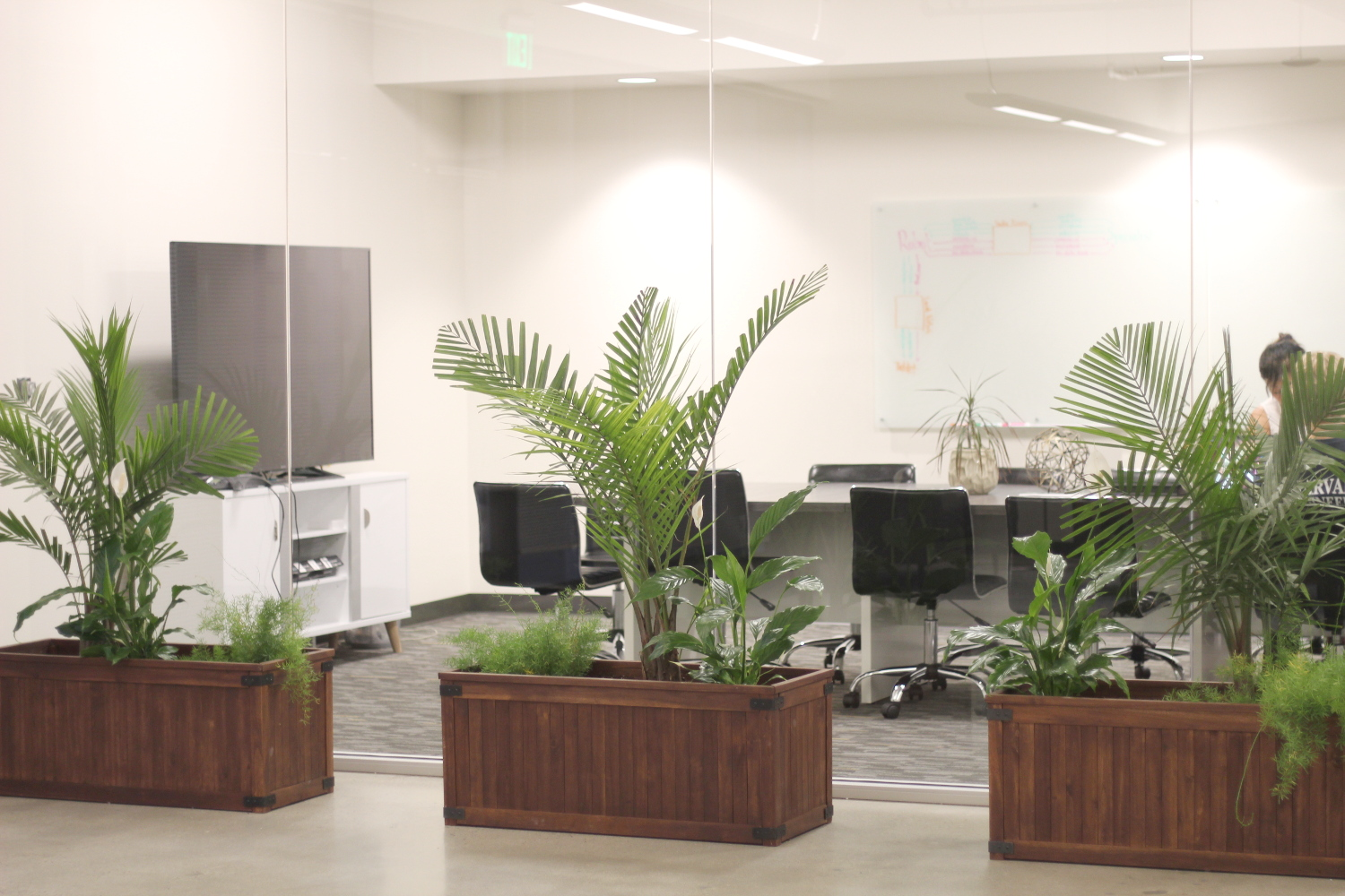 big plants inside office arrangement
