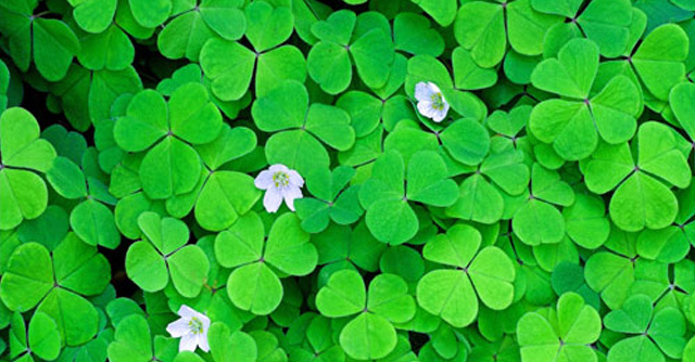 Wishing You A Happy St. Patrick's Day! | The LOOP Blog